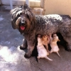 Puppy Necessities