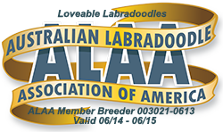 Loveable Labradoodles ALAA Logo