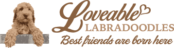 Loveable Labradoodles - Best friends are born here